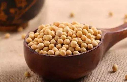 大豆的作用