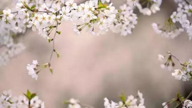 在春天时做好这些健康注意事项,保你一年不生病!
