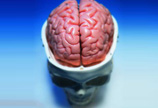 高清晰人体头部模型图片
